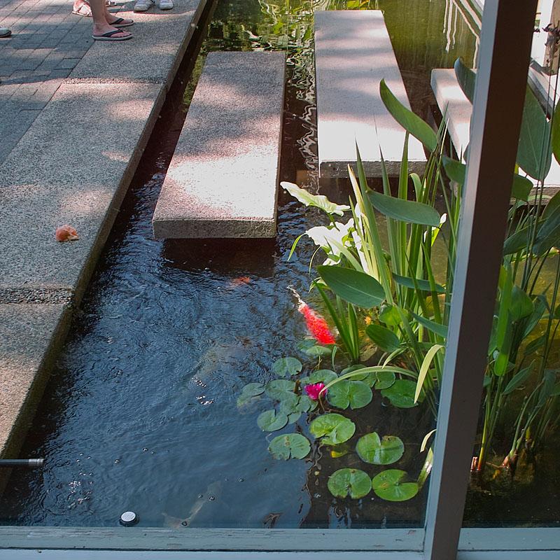 Ledingham wiens residence koi poind vancouver modern for Koi pond modern